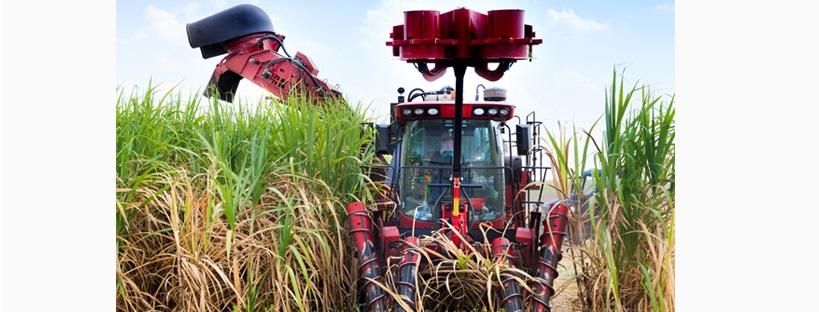 sela-bio-oekonomie-zuckerrohr